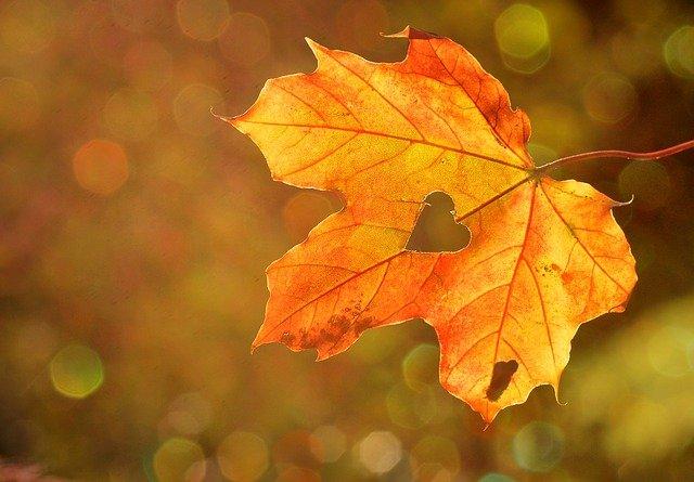 jesieni-podbicie-zaplecz-statlink-264.jpg